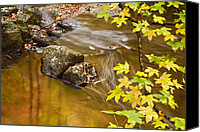 Autumn Photographs Canvas Prints - Shimmering Gold Canvas Print by Rob Travis