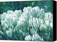 Tulip Mixed Media Canvas Prints - Shimmering Tulips Canvas Print by Zeana Romanovna