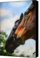 Bridle Canvas Prints - Side by Side Canvas Print by Darren Fisher
