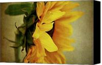 Sunflowers Canvas Prints - Sideways Canvas Print by Cathie Tyler