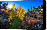 Aspen Trees Canvas Prints - Sierra Nevada Fall Colors Lassen County California Canvas Print by Scott McGuire