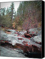 Sierra Canvas Prints - Sierra Nevada Forest 1 Canvas Print by Irina  March