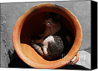 Pictures Of Cats Canvas Prints - Siesta 1 Canvas Print by Xueling Zou