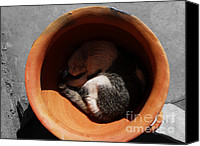 Pictures Of Cats Canvas Prints - Siesta 2 Canvas Print by Xueling Zou