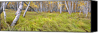 Fall Scenes Canvas Prints - Sieur de Monts Forest - Acadia National Park Canvas Print by Thomas Schoeller