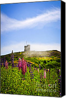 Lupines Canvas Prints - Signal Hill in St. Johns Newfoundland Canvas Print by Elena Elisseeva