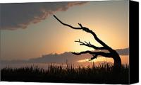 Beautiful Tree Canvas Prints - Silhouette Canvas Print by Bob Orsillo