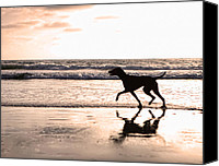 Hound Canvas Prints - Silhouette of dog on beach at sunset Canvas Print by Susan  Schmitz