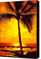 Solitude Canvas Prints - Silhouetted Palm Canvas Print by Ron Dahlquist - Printscapes