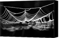 Spider Canvas Prints - Silk River Canvas Print by Jan Piller