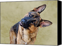 Alsatian Canvas Prints - Silly Boy Canvas Print by Sandy Keeton