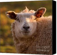 Sheep Photo Canvas Prints - Silly Face Canvas Print by Angel  Tarantella