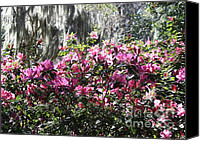 Savannah Square Canvas Prints - Silver and Pink in Savannah Canvas Print by Carol Groenen