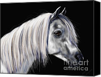 Pets Canvas Prints - Silver Grey Arab Mare Canvas Print by Michelle Wrighton