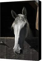 Horse Digital Art Canvas Prints - Silver Canvas Print by Jack Goldberg