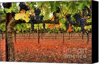 Blue Grapes Canvas Prints - SImply Divine Canvas Print by Mars Lasar