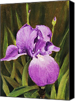 Greeting Card Pastels Canvas Prints - Single Iris Canvas Print by Anastasiya Malakhova
