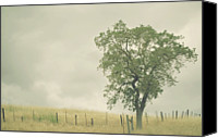 Solitude Canvas Prints - Single Oak Tree Canvas Print by Pamela N. Martin