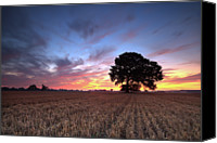 Solitude Canvas Prints - Single Tree In Cornfield At Dawn Canvas Print by Justin Minns