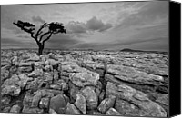 Solitude Canvas Prints - Single Tree In Yorkshire Dales Canvas Print by Duncan George