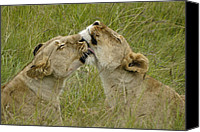 Animals Canvas Prints - Sisterly Love Canvas Print by Michele Burgess