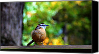 Wren Digital Art Canvas Prints - Sitting Pretty Canvas Print by Sharon Batdorf