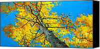 Fall Leaves Canvas Prints - Sky High 3 Canvas Print by Gary Kim