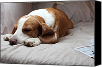Dog Bed Photo Canvas Prints - Sleeping Dog Canvas Print by Tao-Tzu Chang