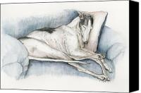 Greyhound Canvas Prints - Sleeping Greyhound Canvas Print by Charlotte Yealey