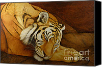 Brown Tiger Painting Canvas Prints - Sleeping Tiger Canvas Print by Norm Holmberg
