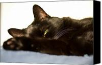 Feline  Canvas Prints - Sleeping with one eye open Canvas Print by Bob Orsillo