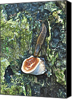 Mushroom Canvas Prints - Slug 7044 1674 2 Canvas Print by Michael Peychich