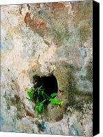 Stucco Canvas Prints - Small Ferns Canvas Print by Perry Webster