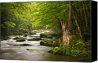 Gatlinburg Canvas Prints - Smoky Mountains Solitude - Great Smoky Mountains National Park Canvas Print by Dave Allen