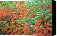 Red And Green Canvas Prints - Smooth Sumac Red and Green Leaves Canvas Print by Thomas R Fletcher