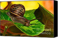 Helix Canvas Prints - Snail in Colorful Habitat Canvas Print by Kaye Menner