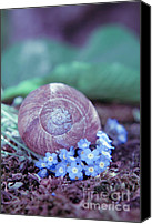 "\""forget Me Not Flowers\\\"" Canvas Prints - Snail shell in a bed of forget-me-not Canvas Print by Viaina"