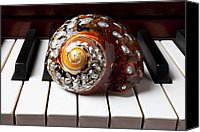 Chambers Canvas Prints - Snail shell on keys Canvas Print by Garry Gay