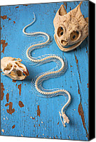 Poison Canvas Prints - Snake skeleton and animal skulls Canvas Print by Garry Gay