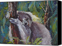 Koala Canvas Prints - Snooze Canvas Print by Pamela Pretty
