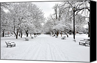 Row Canvas Prints - Snow Covered Benches And Trees In Washington Park Canvas Print by Shobeir Ansari
