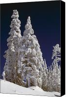 Selection Canvas Prints - Snow-covered Pine Trees On Mount Hood Canvas Print by Natural Selection Craig Tuttle