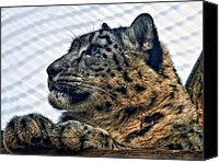 Toronto Zoo Canvas Prints - Snow Leopard Canvas Print by Steve Harrington