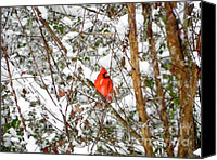 Cardinals. Wildlife. Nature. Photography Canvas Prints - Snow Perch Canvas Print by Jennifer Wosmansky