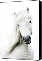Animal Head Shot Canvas Prints - Snowhite Canvas Print by Gigja Einarsdottir