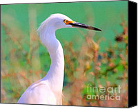 Snowy Egrets Canvas Prints - Snowy Egret . Painterly Canvas Print by Wingsdomain Art and Photography