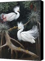 Snowy Egrets Canvas Prints - Snowy Egrets Display Their Courtship Canvas Print by Walter A. Weber