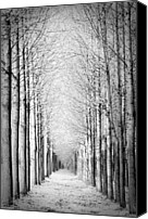 Infinity Canvas Prints - Snowy Forest Canvas Print by by Rafael Zwiegincew