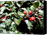 Akermans Art Canvas Prints - Snowy Holly Canvas Print by Beth Akerman