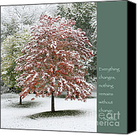 Zen Words Of Wisdom Canvas Prints - Snowy Maple with Buddha Quote Canvas Print by Heidi Hermes